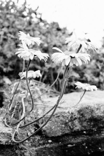 flower 06012016_9