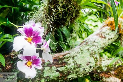 Flowery Dream 1