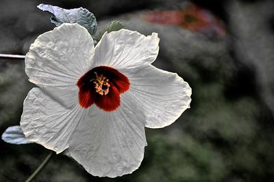 Waimea Valley Flower, Oahu
