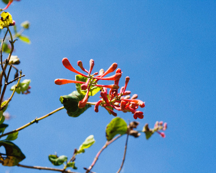 flower06072016_6