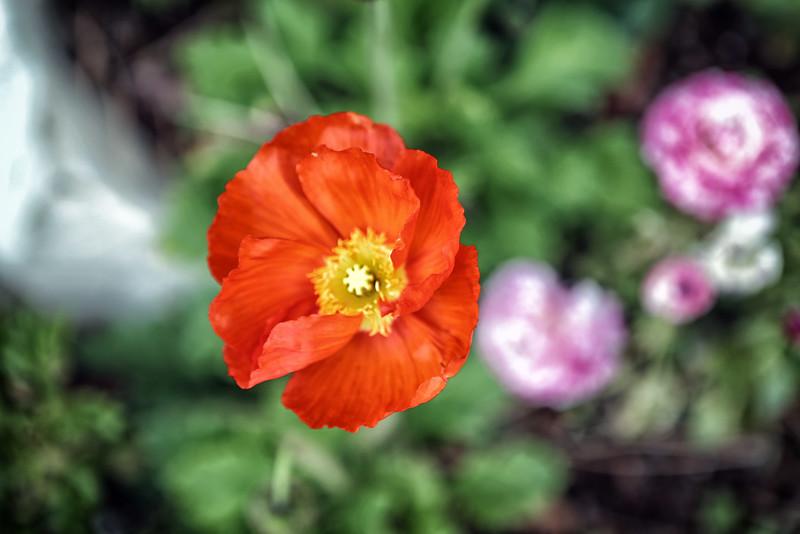 California Flower