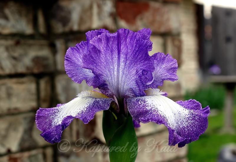 Proudly Purple