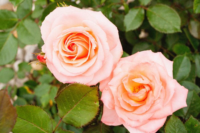 flower 06012016_13