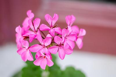 Flower #6