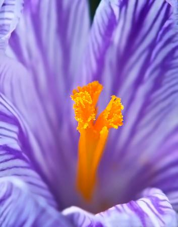 Flower Orange Stamen