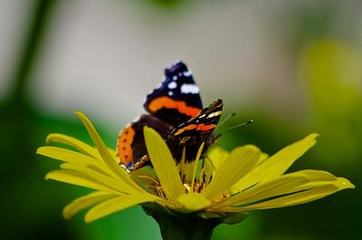 Butterfly in Kilmacurragh Botanic Gardens