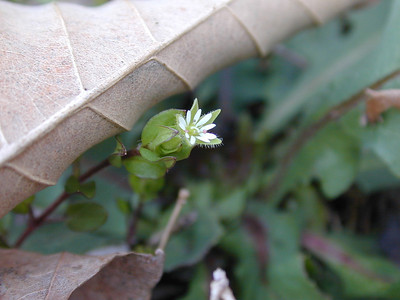 Even Tinier Wildflower