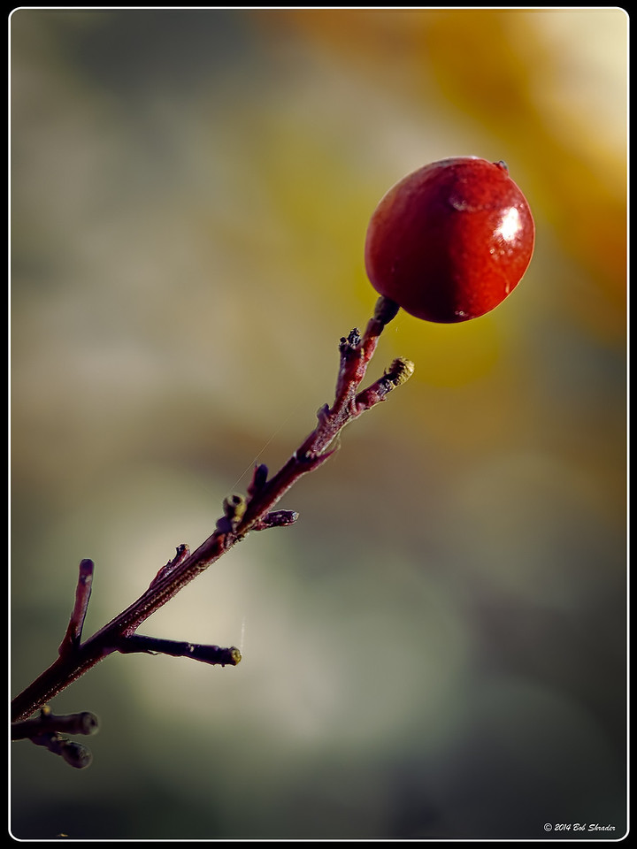 Restyled Winter Berry
