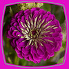 2014-07-28 Birthday flowers 18