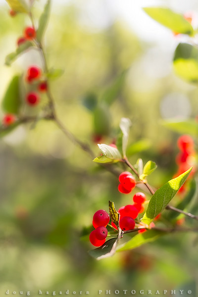 Berries of Summer