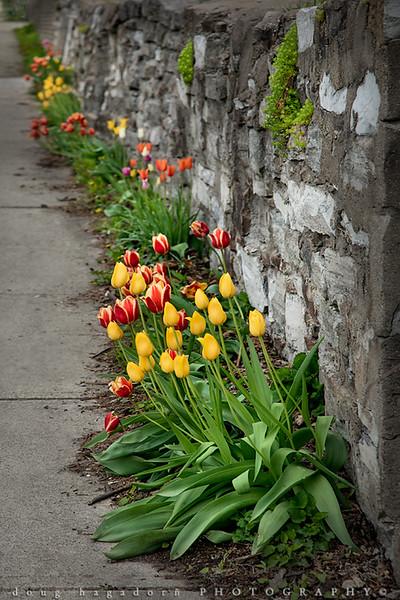 Spring's Colourfest (#0535)