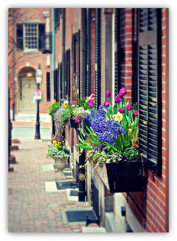 Beacon Hill Window Boxes