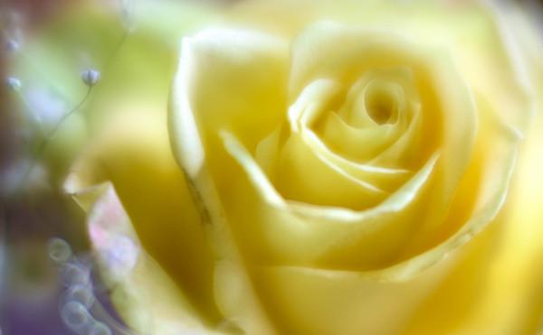 bouquet beauty ...