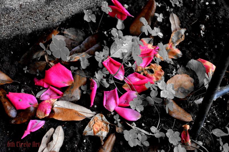 Fallen Color