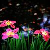 Pink and Green #2, Zilker Botanical Gardens