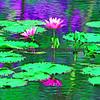 Stylized lily pad pool.