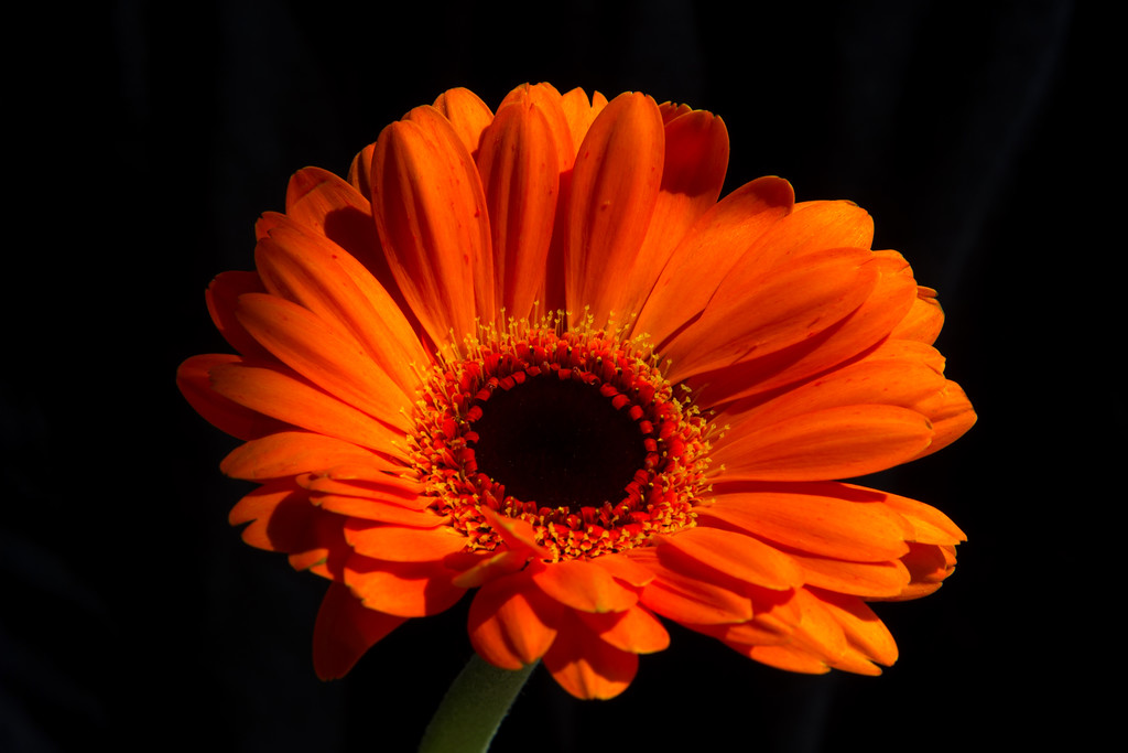 Solitary Orange