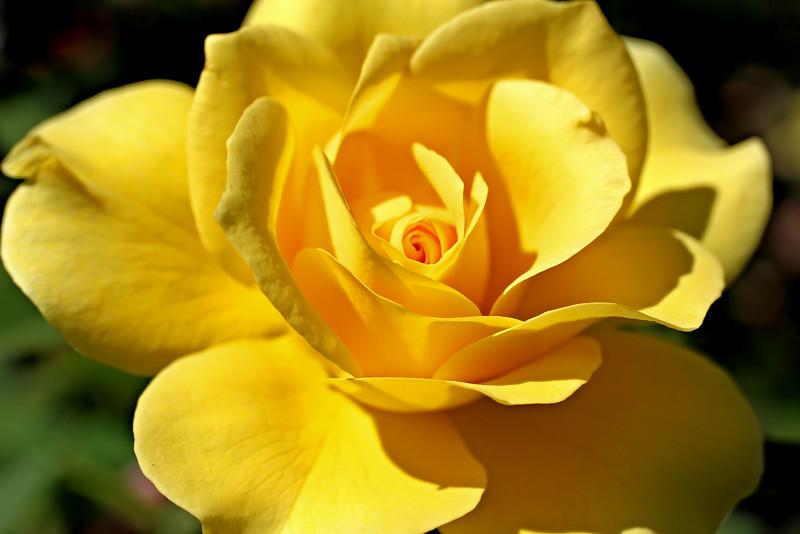 Vivid Yellow.jpg