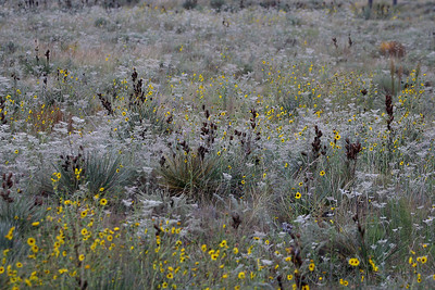 Prairie flowers and plants - Chivington, Colorado