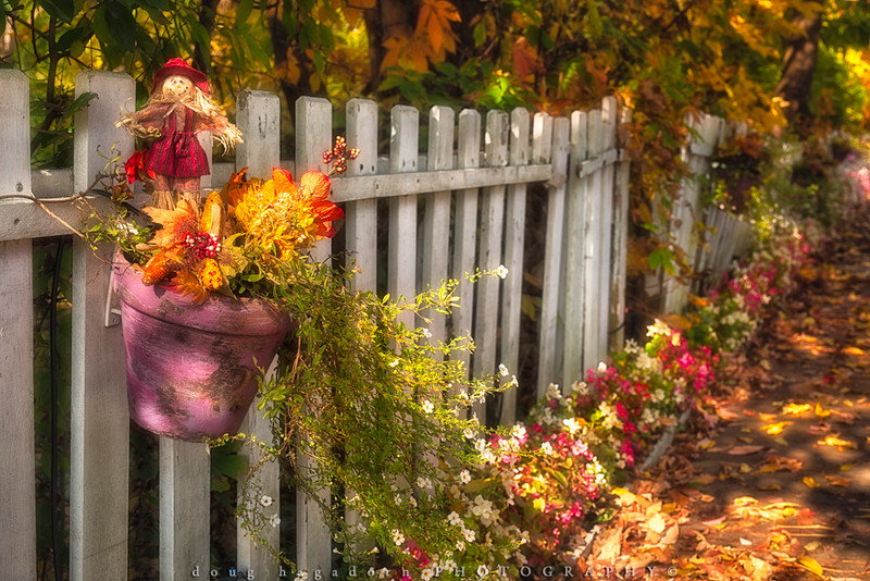 Autumn Fence (#0233)