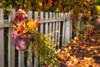 Autumn Fence (#0233)