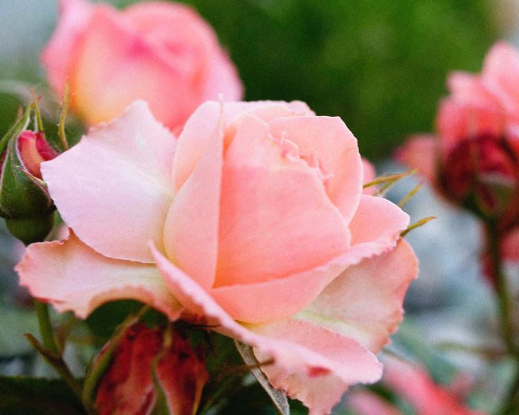 flower06072016_1