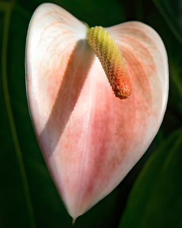 Hillwood Flower