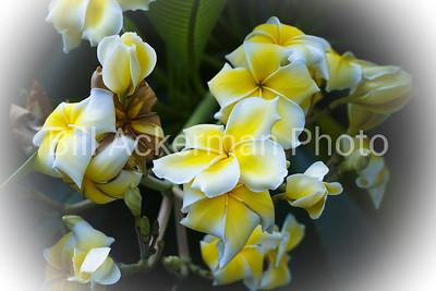 Spring Flowers (Vignette)
