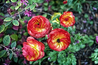 California Flower 3