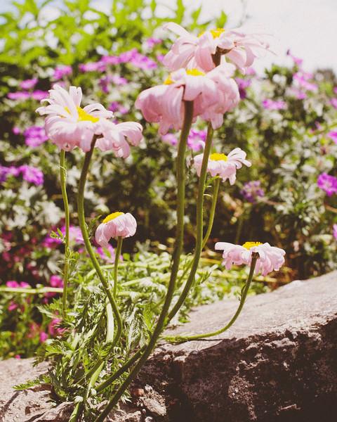 flower06072016_9