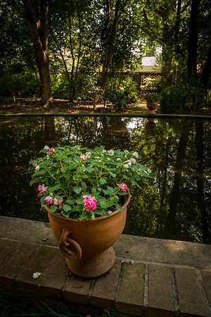 Potted Roses and Pool