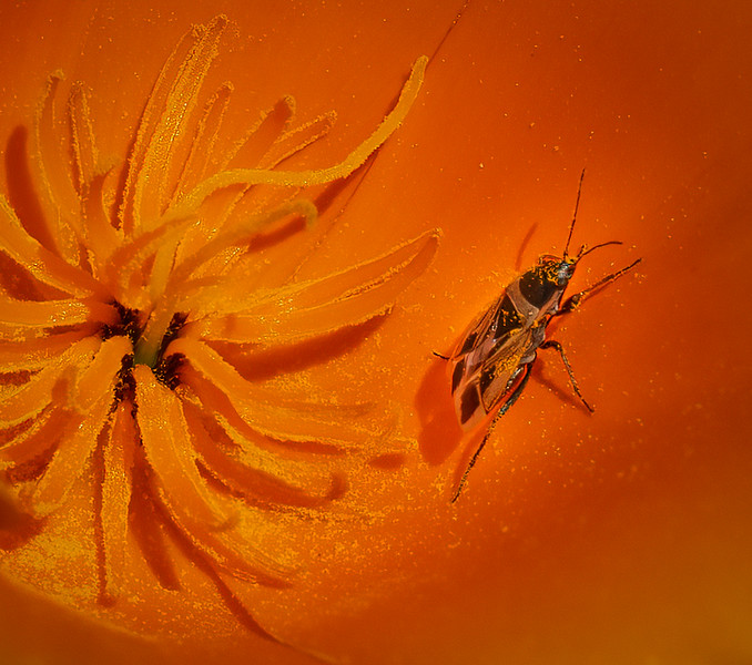 Poppy & Beetle