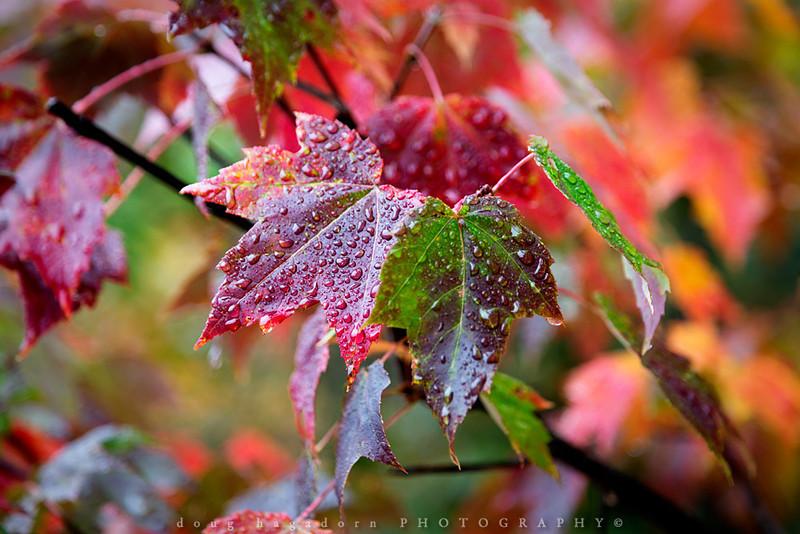 Autumn's Rain (#0155)