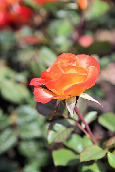 Orange side blossom.jpg