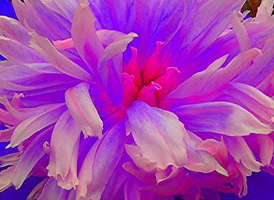Inniswood_flower0024-2