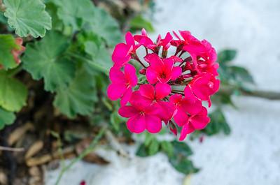 Flower #10