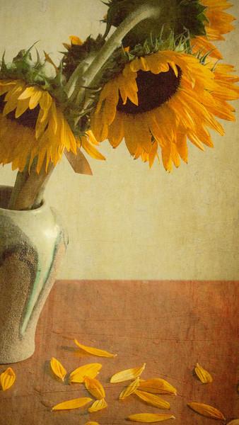 sunflowertwo copy