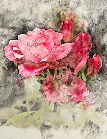 restful rose ...