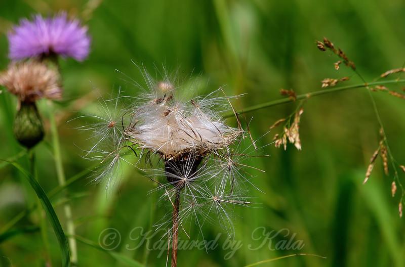 Seedlets