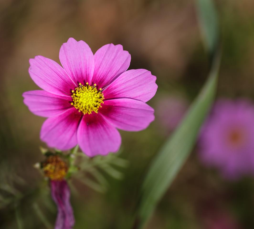 IMAGE: https://photos.smugmug.com/Flowers/i-tr44vnF/1/8273e4f3/X2/IMG_4871-X2.jpg