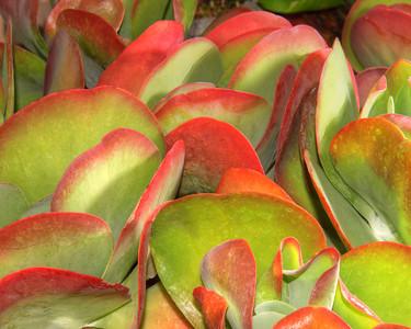 Cactus 3774