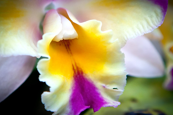 Flower, Yellow Blossom - Longwood Gardens