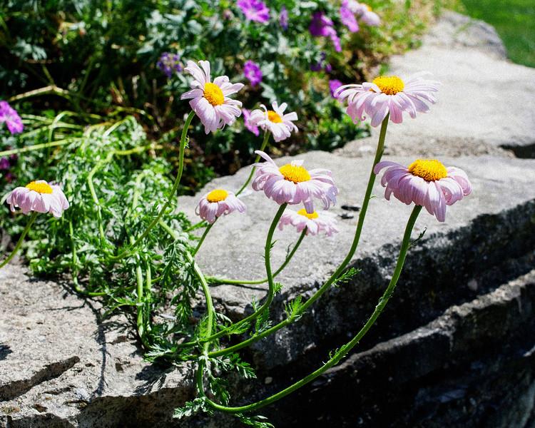 flower06072016_8