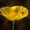 Poppy & Bug