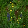 Wildflowers 2923