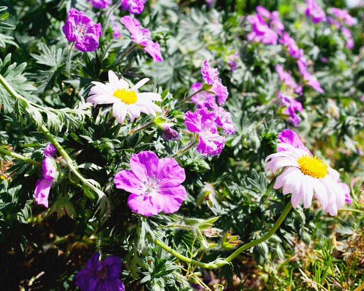 flower06072016_10