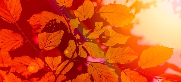 autumn splendor ...