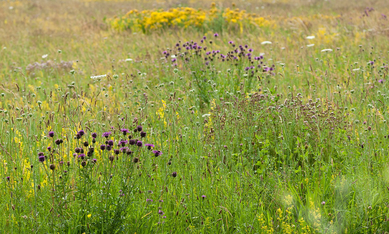 Meadow of colourful wild flowers