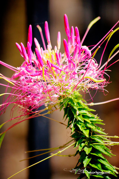 Flower from China Town