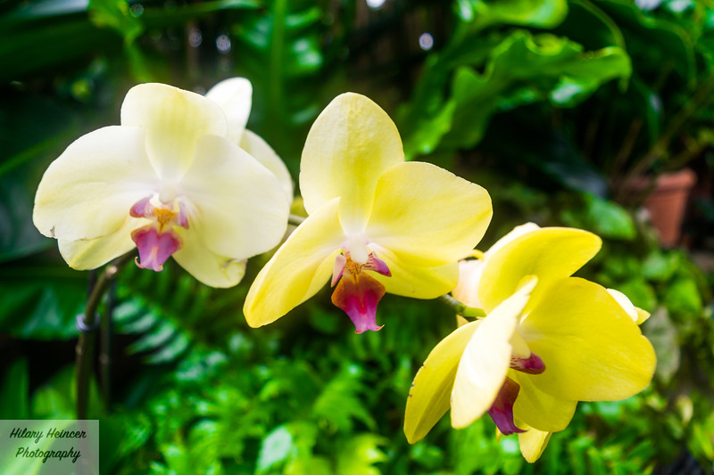 Flowery Dream 2